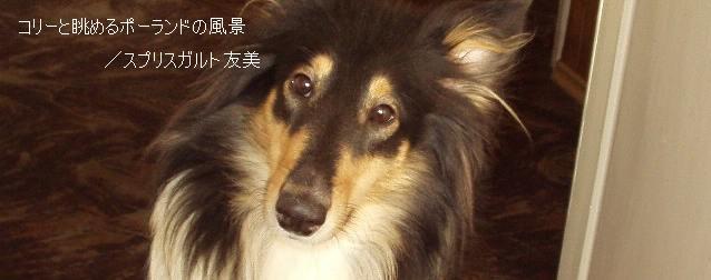 家に犬がいたことはなかったけれど、犬はいつも身近な存在だった。母が高校生の時に飼い始めた秋田犬のまるちゃんが祖母と一緒に暮らしていて、遊びに行くたびに会えたからだ。血統書付きで由緒正しく、「若月姫号」という立派な名前を持...