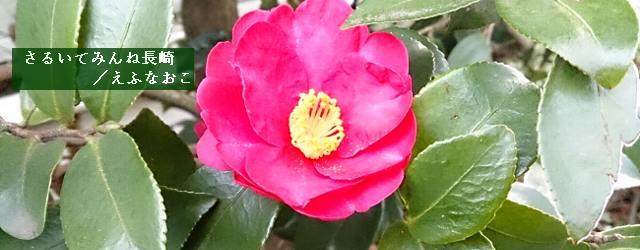 椿は日本原産の植物で、長崎県に広く分布し、冬から春にかけて咲く。美しいだけでなく、実から良質の油が取れる。「県の木」でもある椿は、長崎の潜伏キリシタン、カトリック信仰と縁が深い。これは、伝道師バスチャンの伝説から始まる。...