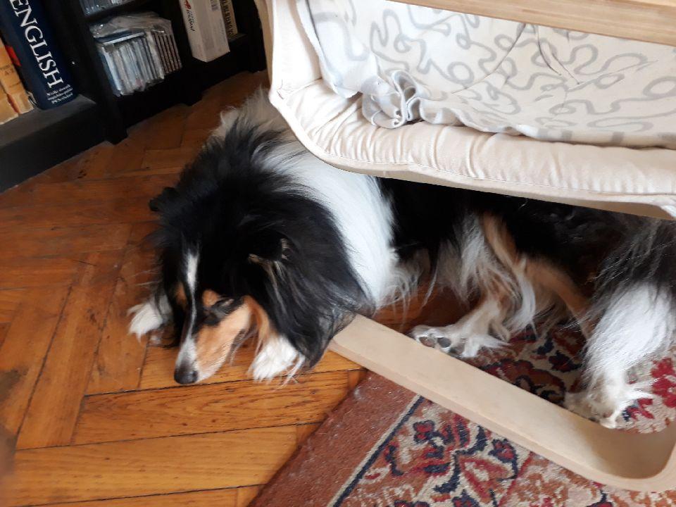 4.でも一番好きなのは椅子の下で眠ること。この椅子が壊れてもまた同じタイプの椅子を買わなければならないかな。