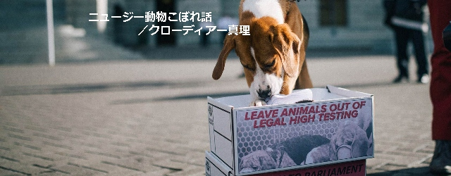 第6回 人間を幸せにしてくれる動物から、人間が幸せを奪う権利はないはずなのに