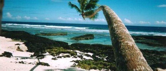 第1回 パラダイスビーチの椰子の木