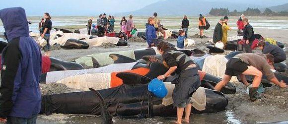 第1回 座礁クジラは今も人々の胸に