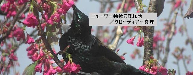 第4回 ここにしかいない鳥たちの風変わりな一面