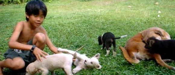 第16回 子犬たちとの交流、そして別れ